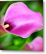 Calla Lilly Metal Print by Kathleen Struckle
