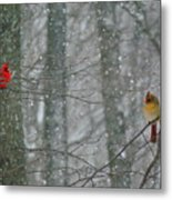 Cardinals In Snow Metal Print by Serina Wells