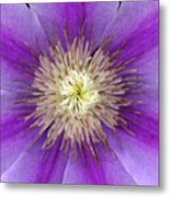 Clematis Metal Print by Christopher Gruver