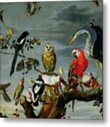 Concert Of Birds Metal Print by Frans Snijders