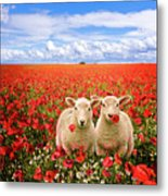Corn Poppies And Twin Lambs Metal Print by Meirion Matthias