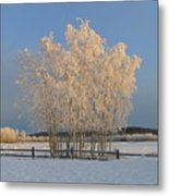 Creamer Field Metal Print by Louise Magno