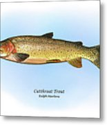 Cutthroat Trout Metal Print by Ralph Martens