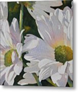 Daisy Bunch Metal Print by Judy Mercer