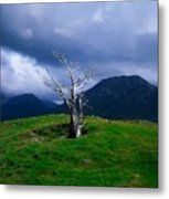 Dead Tree, Connemara, Co Galway, Ireland Metal Print by The Irish Image Collection