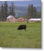 Down On The Farm Metal Print by Angi Parks
