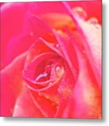 Early Morning Rose Metal Print by Ashley Balkan