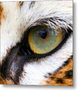 Eye Of The Tiger Metal Print by Helen Stapleton