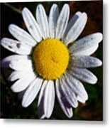 Flower Power Metal Print by Bill Cannon