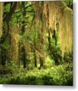Forest Fantasy - Quinault - Gateway To Paradise On The Olympic Peninsula Wa Metal Print by Christine Till