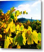 Grape Leaves And The Sky Metal Print by Elaine Plesser