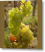 Grape Spiral Metal Print by Patricia Overmoyer