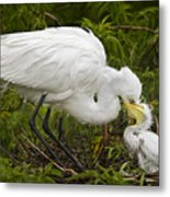 Great Egret And Chick Metal Print by Susan Candelario