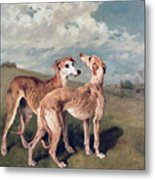 Greyhounds Metal Print by John Emms
