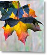 Harbinger Of Autumn Metal Print by Sean Griffin
