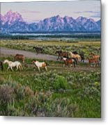 Horses Walk Metal Print by Jeff R Clow