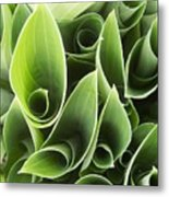 Hostas 5 Metal Print by Anna Villarreal Garbis