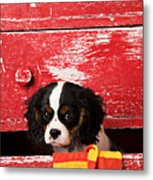 King Charles Cavalier Puppy  Metal Print by Garry Gay