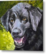 Lab Out Of The Pond Metal Print by Susan A Becker