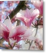 Magnolia Blossoms Metal Print by Sandy Keeton