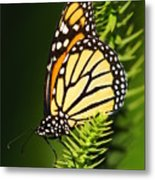 Monarch Butterfly Metal Print by The Photography Factory