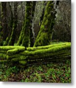 Mossy Fence 3 Metal Print by Bob Christopher