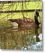 Mother Goose Metal Print by Laura Brightwood