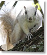 Mr. Inquisitive II Metal Print by Betsy Knapp