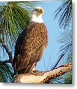 Olympia Street Eagle Metal Print by Sandy Poore