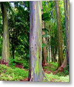 Rainbow Eucalyptus Metal Print by Monica and Michael Sweet