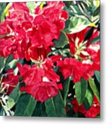 Red Rhododendrons Of Dundarave Metal Print by David Lloyd Glover