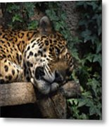 Relaxing Metal Print by Ernie Echols