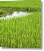 Rice Paddy Field In Siem Reap Cambodia Metal Print by Julia Hiebaum