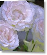 Rose 120 Metal Print by Pamela Cooper