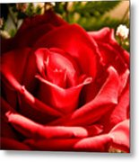 Rose For My Valentine Metal Print by Thomas R Fletcher