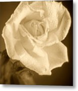 Sepia Rose With Rain Drops Metal Print by M K  Miller