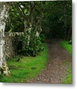 Shady Lane Metal Print by Warren Home Decor