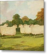 Study Of Sheep In A Landscape   Metal Print by Richard Whitford