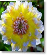 Sunshine Dahlia Metal Print by Karen Wiles