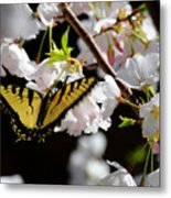 Swallowtail Metal Print by Nathan Grisham