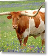 Texas Longhorn Standing In Bluebonnets Metal Print by Jon Holiday