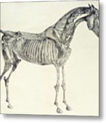 The Anatomy Of The Horse Metal Print by George Stubbs