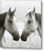 The Greys Metal Print by Ron  McGinnis