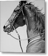 The Horse Metal Print by Harvie Brown