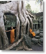 The Roots Of A Strangler Fig Creep Metal Print by Paul Chesley