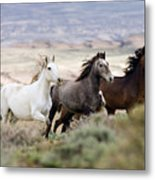 Three Mares Running Metal Print by Carol Walker