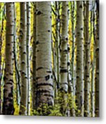 Trees For The Forest Metal Print by Jennifer Grover