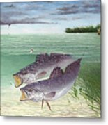 Wade Fishing For Speckled Trout Metal Print by Kevin Brant