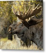 Waiting For The Challengers Metal Print by Sandra Bronstein