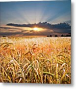 Wheat At Sunset Metal Print by Meirion Matthias